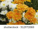flowers  flowers chrysanthemum