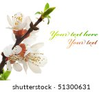 spring blossom | Shutterstock . vector #51300631
