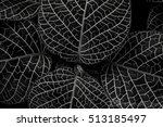 black and white close up of... | Shutterstock . vector #513185497