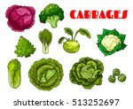 vegetable cabbages set. red... | Shutterstock .eps vector #513252697