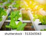 green hydroponic organic salad... | Shutterstock . vector #513265063