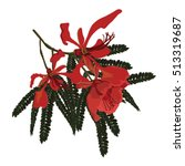 Poinciana Tree And Flowers Wit...