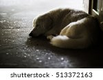 White Dog Sleep On The Floor...