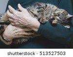 Cat On Hands Elderly Man