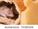 Mouse on bread - stock photo