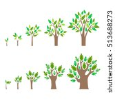 stage growth of a tree set.... | Shutterstock .eps vector #513688273