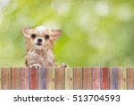 Little Wet Chihuahua Dog Left...