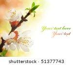 spring blossom | Shutterstock . vector #51377743