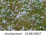 Grass In Snow And Ground  ...
