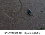 Small photo of Beetle Dytiscidae crawling on the sand
