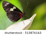 A Beautiful Butterfly As Seen...