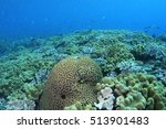 coral life diving papua new... | Shutterstock . vector #513901483