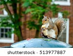 Squirrel Holding And Eating...