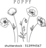 Drawing Flowers. Poppy Flower...