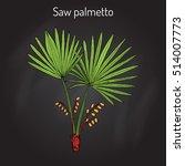 saw palmetto  serenoa repens  ... | Shutterstock .eps vector #514007773