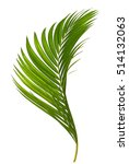 beautiful palm leaves isolated... | Shutterstock . vector #514132063