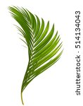 coconut leaf | Shutterstock . vector #514134043