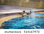 Birds Swimming In The Pool....