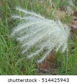 Close Up Photo Of A Wild Grass...