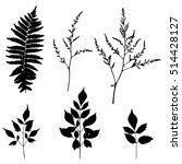 fern leaf and forest herbs... | Shutterstock .eps vector #514428127