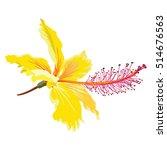yellow hibiscus flower | Shutterstock .eps vector #514676563