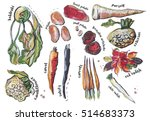 different food components  ink... | Shutterstock . vector #514683373