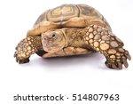african spurred tortoise... | Shutterstock . vector #514807963