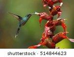 hummingbird green hermit ... | Shutterstock . vector #514844623