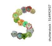 succulent letter s