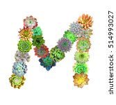 succulent letter m