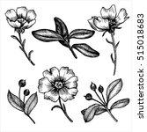 vintage vector floral set of... | Shutterstock .eps vector #515018683