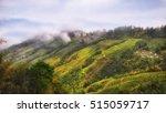 Tea Plantation Landscape On...