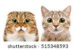portrait of cats scottish fold... | Shutterstock . vector #515348593