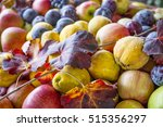 autumn fruit. pears  apple and... | Shutterstock . vector #515356297