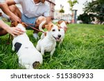 Stock photo cropped image of a couple walking their dogs in a city park 515380933