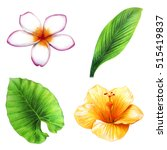 Tropical Leaves And Flowers Se...
