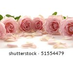 Pink Rose Surround With Petals
