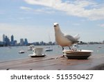 Seagull On A Table In Front Of...