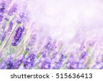 Summer Blossoming Lavender...