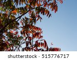 glorious picturesque russet red ... | Shutterstock . vector #515776717