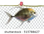 Small photo of African Pompano (Alectis ciliaris) Also known as Gamefish, Pennantfish, Threadfin Pompano, Threadfin Trevally, Diamond Trevally, Thread-Fin Jackfish, Silver Mirrorfish, Threadfish, Hairfish