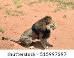 Male Lion In African Bushveld ...