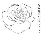 beautiful monochrome black and... | Shutterstock . vector #516025663
