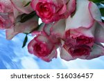 flowers  reflection in pure... | Shutterstock . vector #516036457