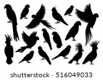 Vector Parrot Silhouettes Of...