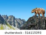 Brown Bear In Mountain...