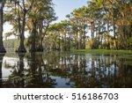 Classic Bayou Swamp Scene Of...