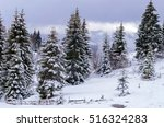 Fir Trees Under The Snow On Th...