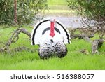 Wild White Turkey