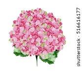 Pink Watercolor Hydrangea...